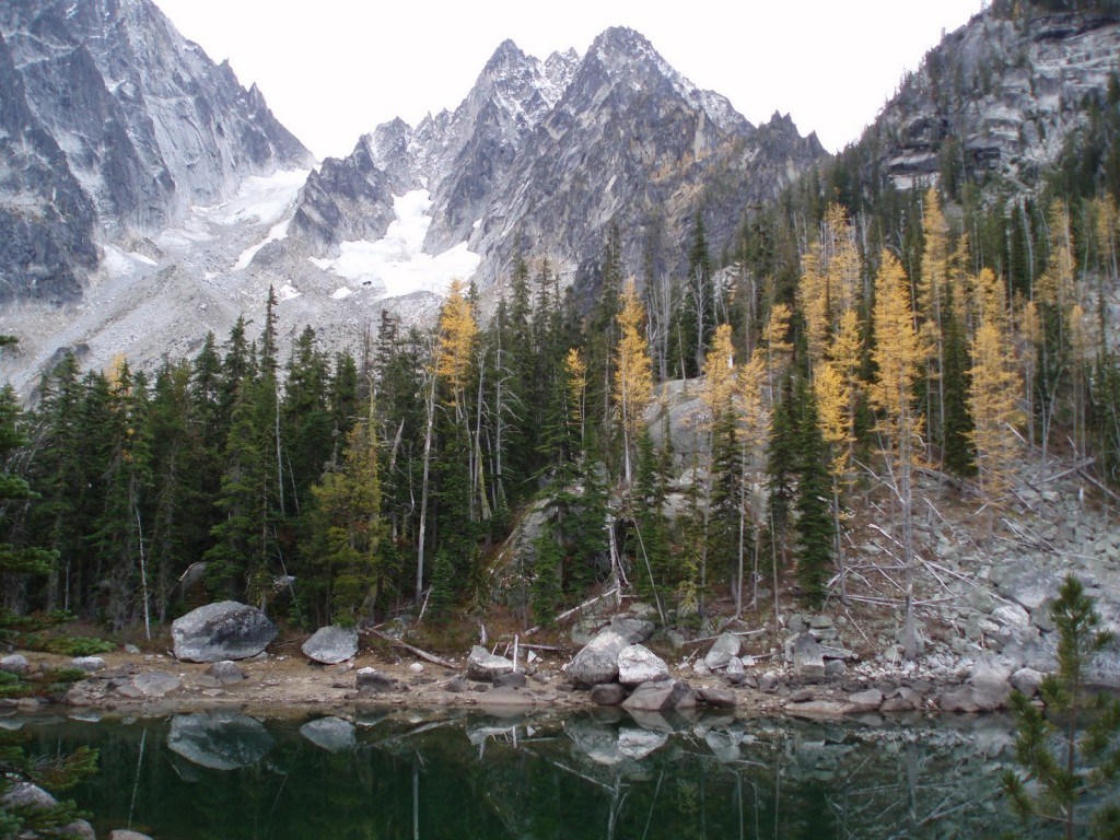 Larches at Stuart Lake
