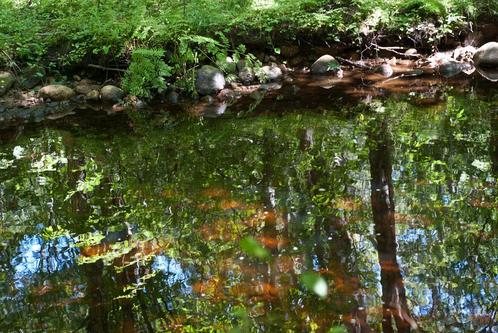 Reflections - Arcadia Hiking Delaware