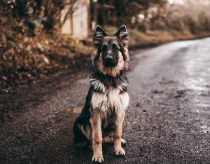 weird nature facts can dogs be depressed?